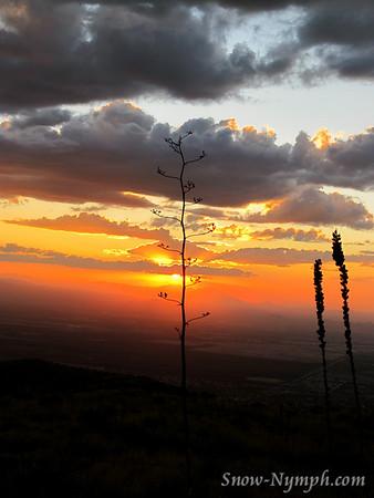 2011 (Oct 26) Tanque Verde attempt, Saguaro NP, Tucson, AZ