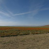 Just west of Antelope Valley Poppy Reserve  This was the biggest patch I saw