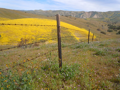 Caliente Access Ridge 4-2-11