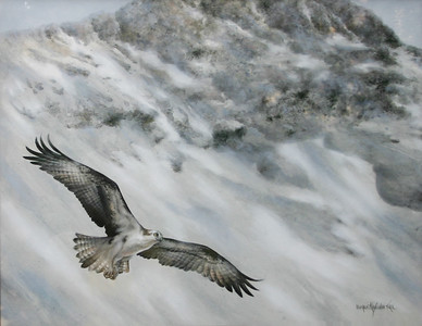 OSPREY FLYING BY BLACKCOMB MOUNTAIN