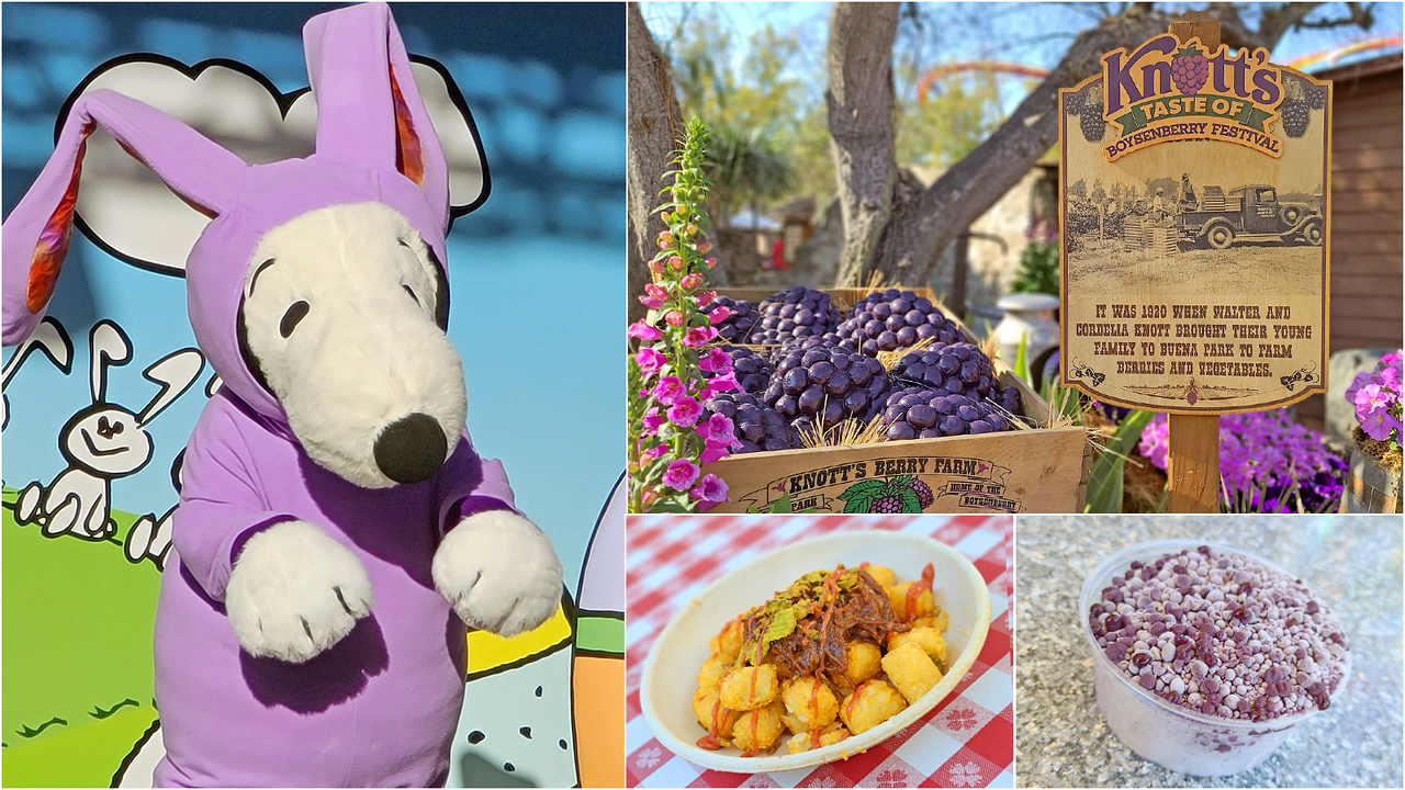 PICTORIAL-Colorful-KNOTT'S-TASTE-OF-BOYSENBERRY-FESTIVAL-is-a-berry-good-time-with-food-and-fun-in-full-bloom