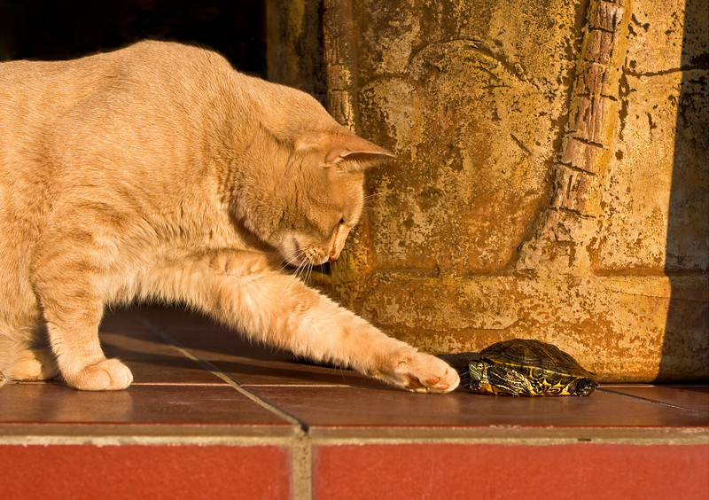 Mike the Cat and red eared slider