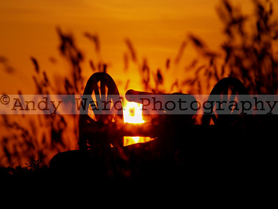 cannon2_wheat_0608