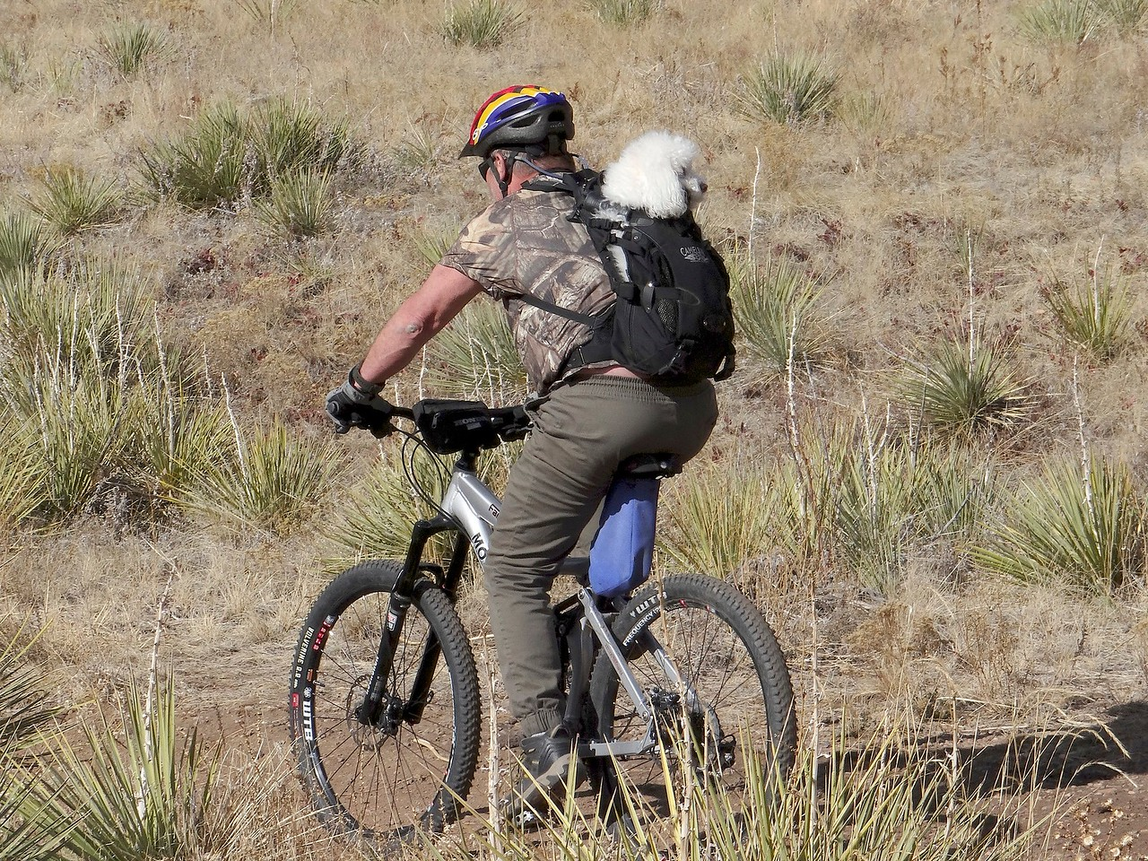 Says his poodle loves to go on bike rides. She was perfectly content!