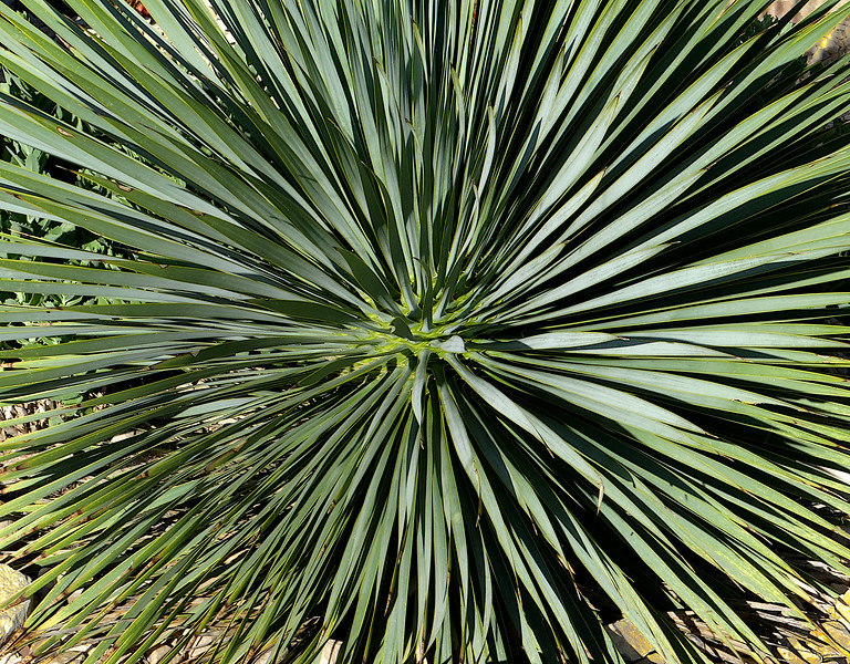 Boom! Yucca explosion