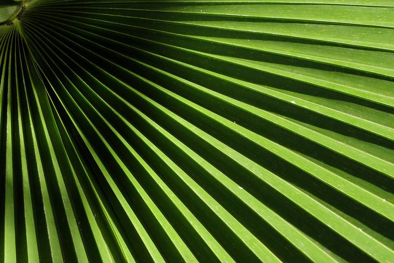 Palm leaf design