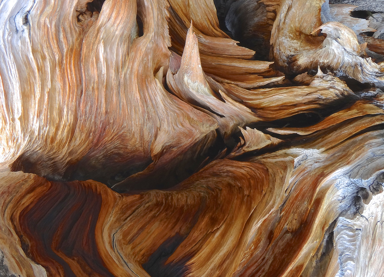 Amazing colors and shapes of an eroding Bristlecone stump