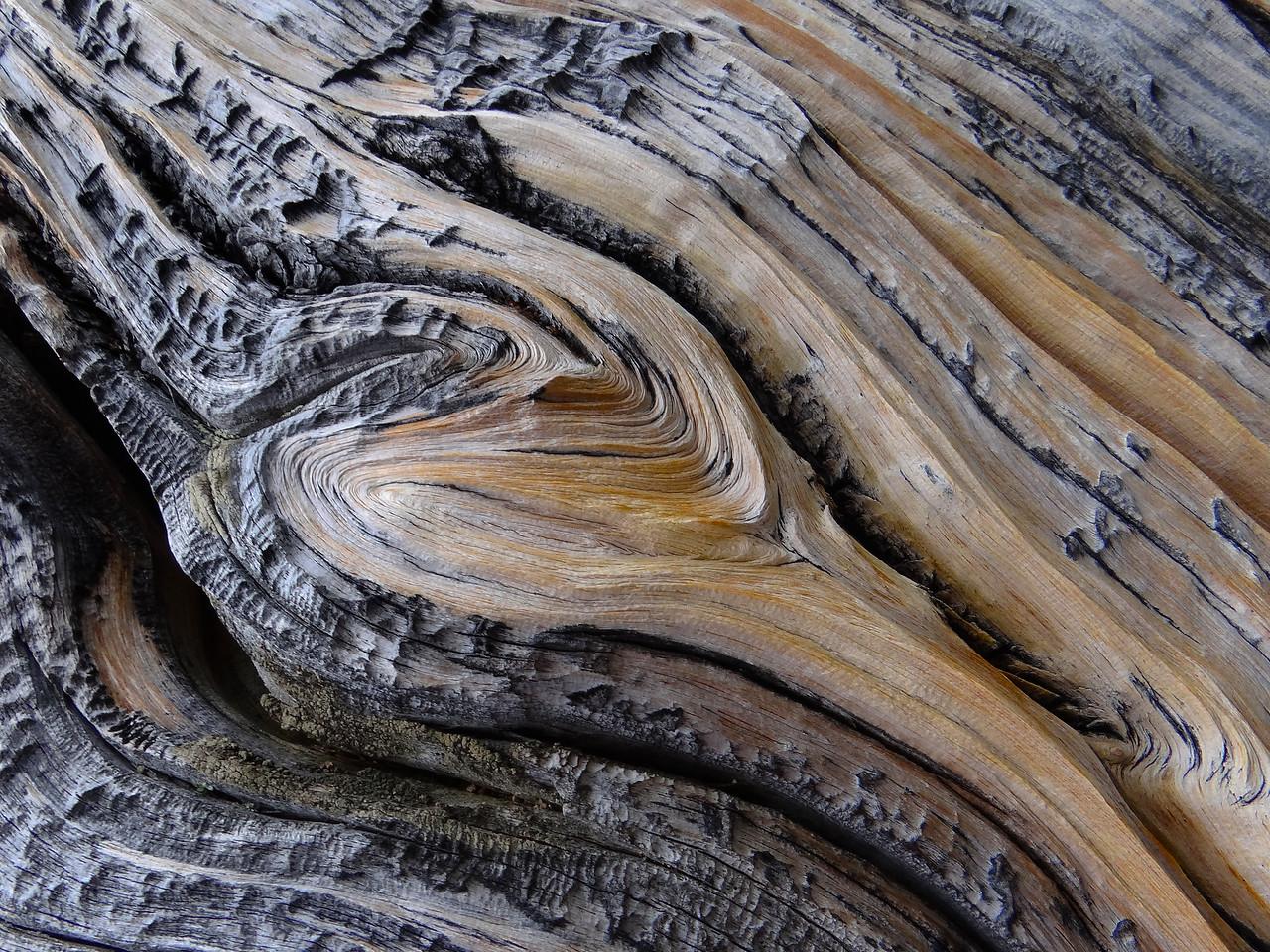 Bristlecone Pine detour