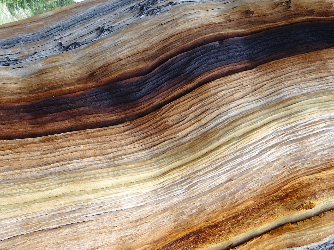 Spectrum of colors in an exposed Bristlecone Pine trunk