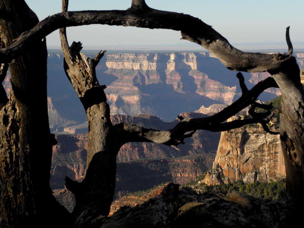 Grand pine frame