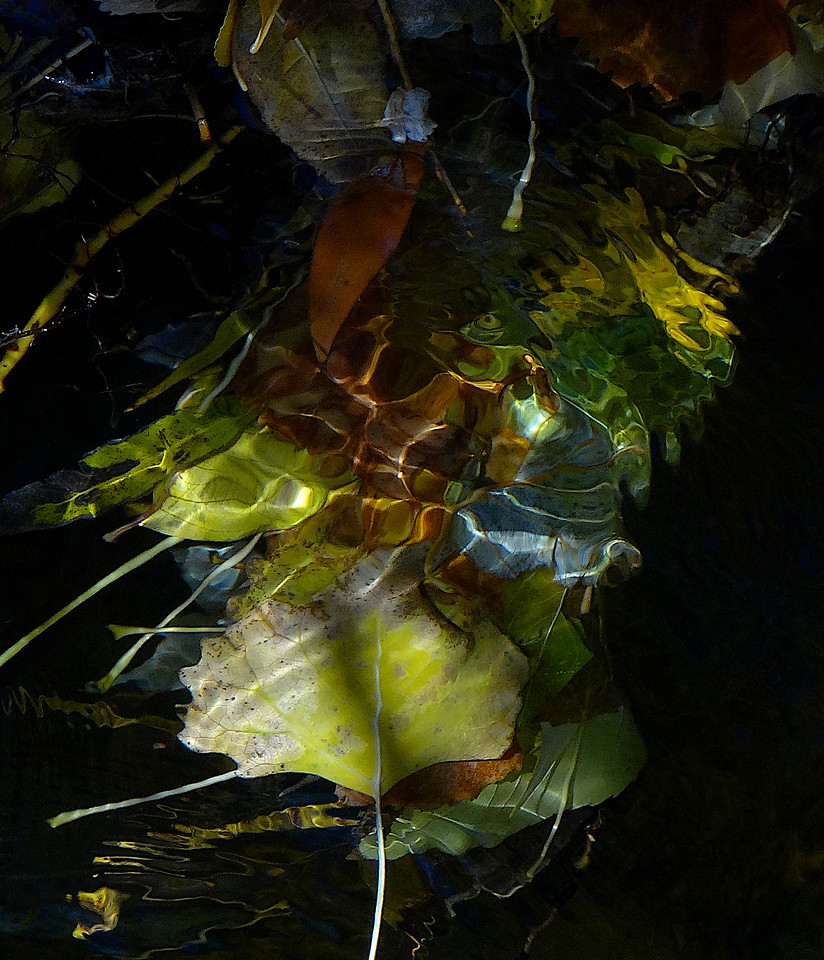 Submerged fall leaves
