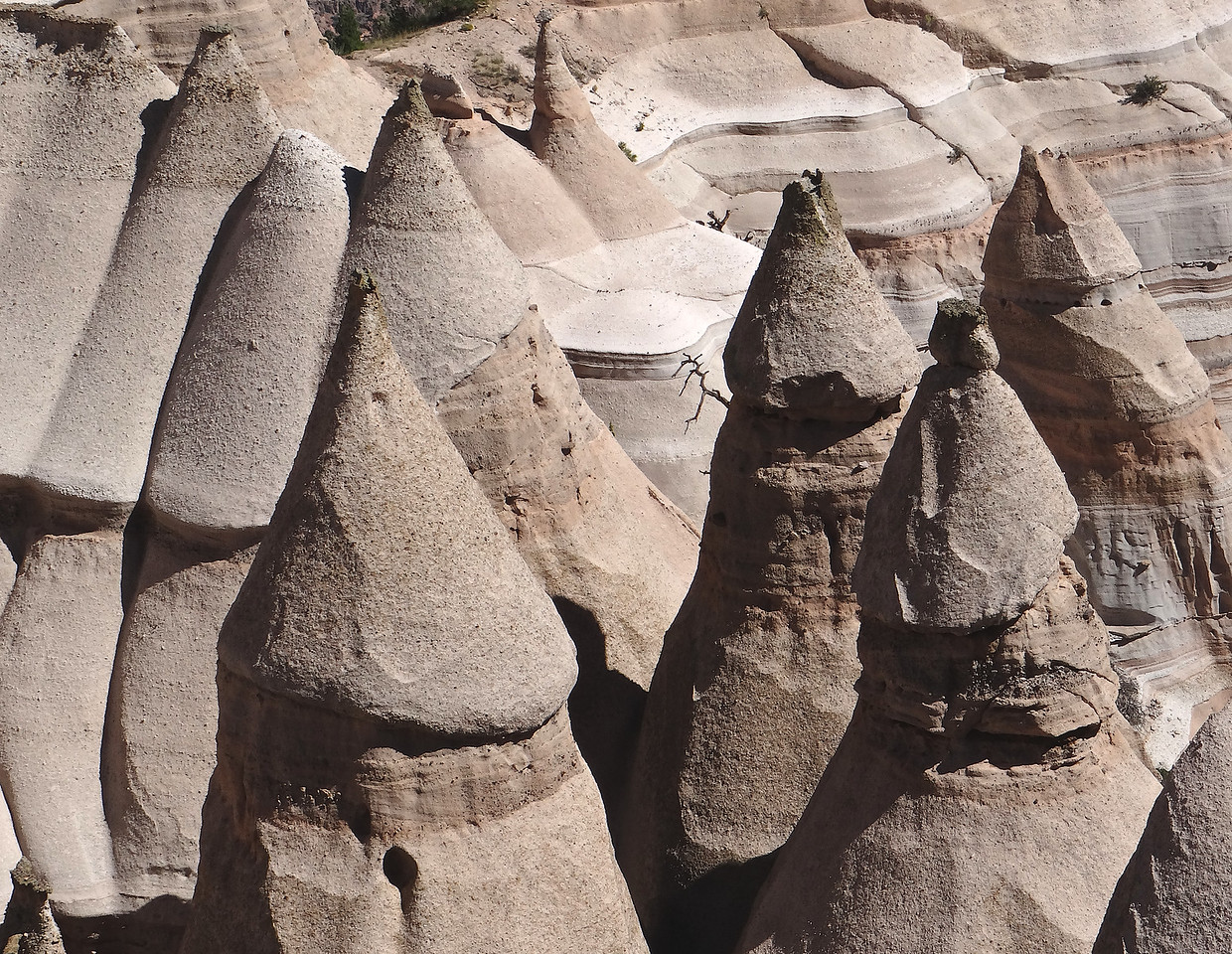 Even when you see that dead tree, it's hard to grasp the scale of these hoo doos in Tent Rocks Park, NM