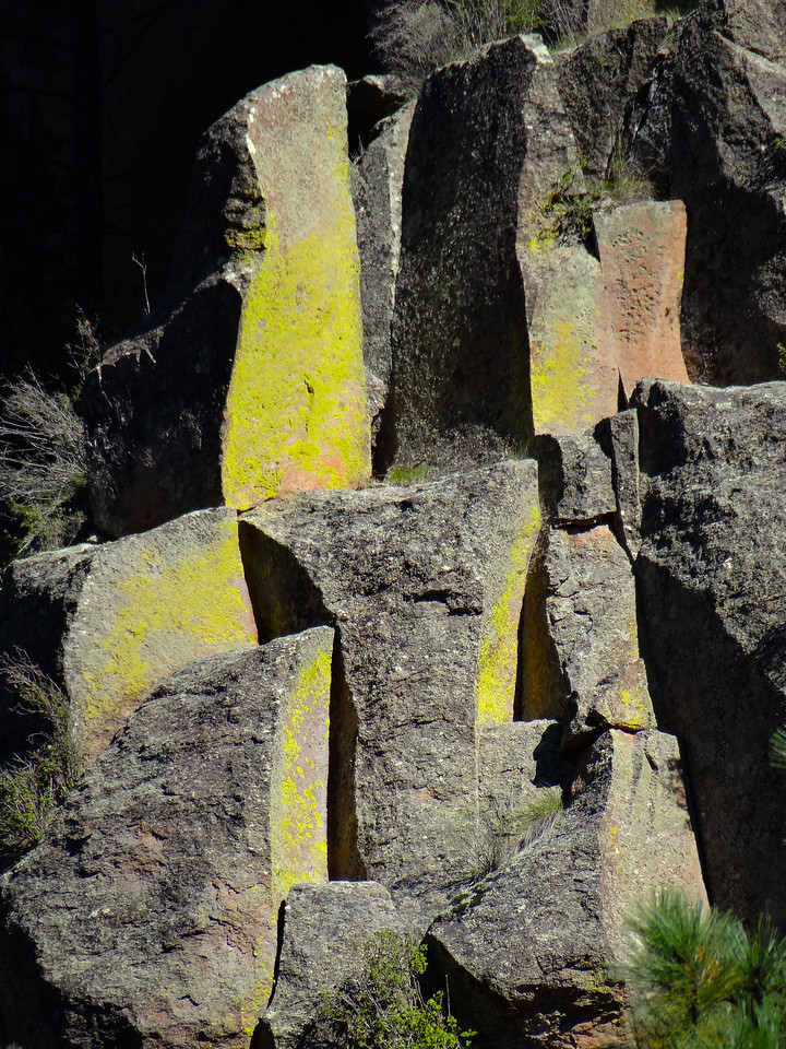 Chartreuse lichen on large chess-piece rocks in the Jemez Mtns, NM
