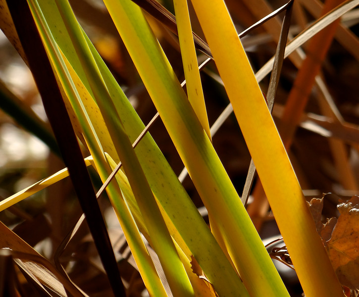 Cattail lines