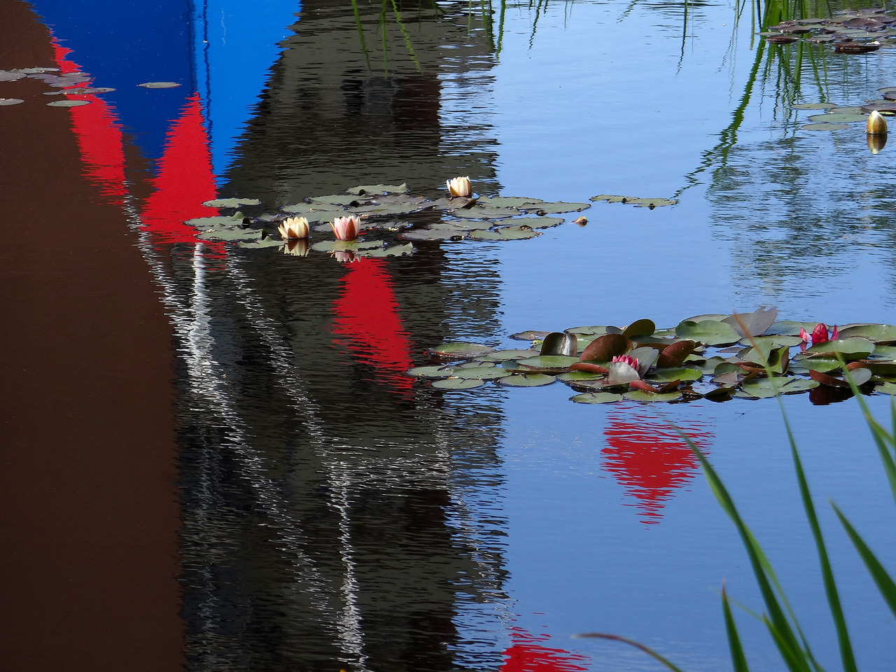 Calder reflection and water lilies