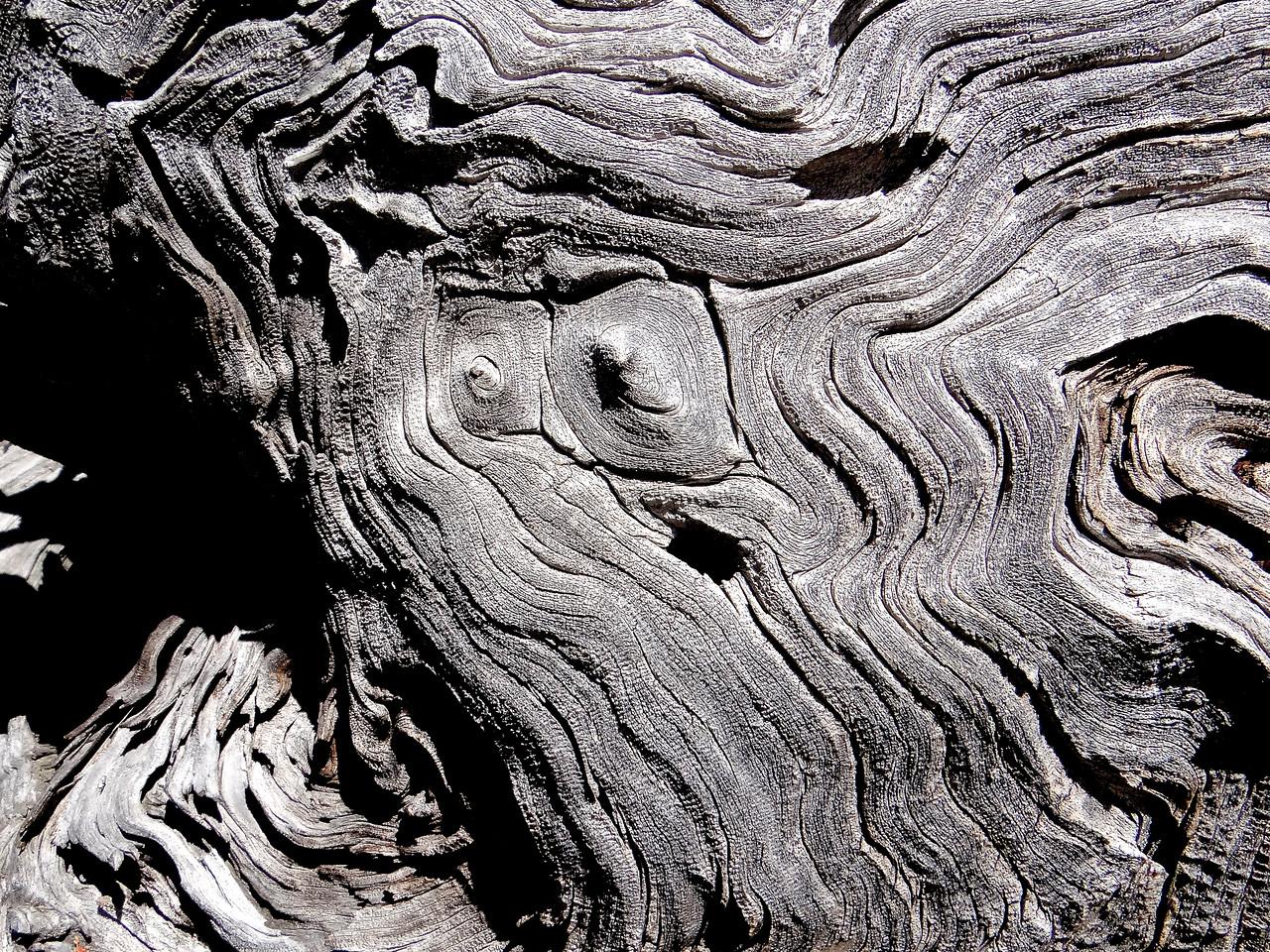 Stump creature