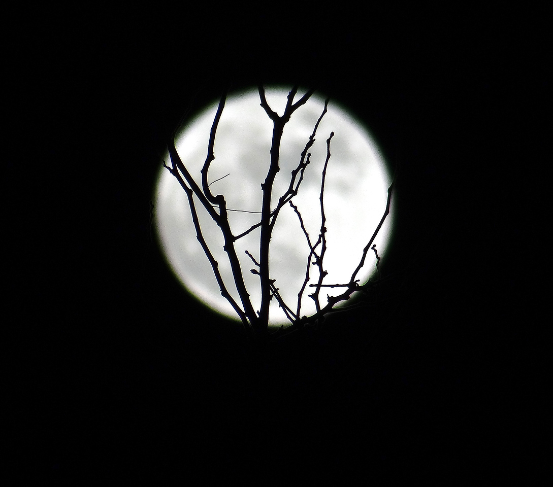 The lesser-known Twiggy Moon