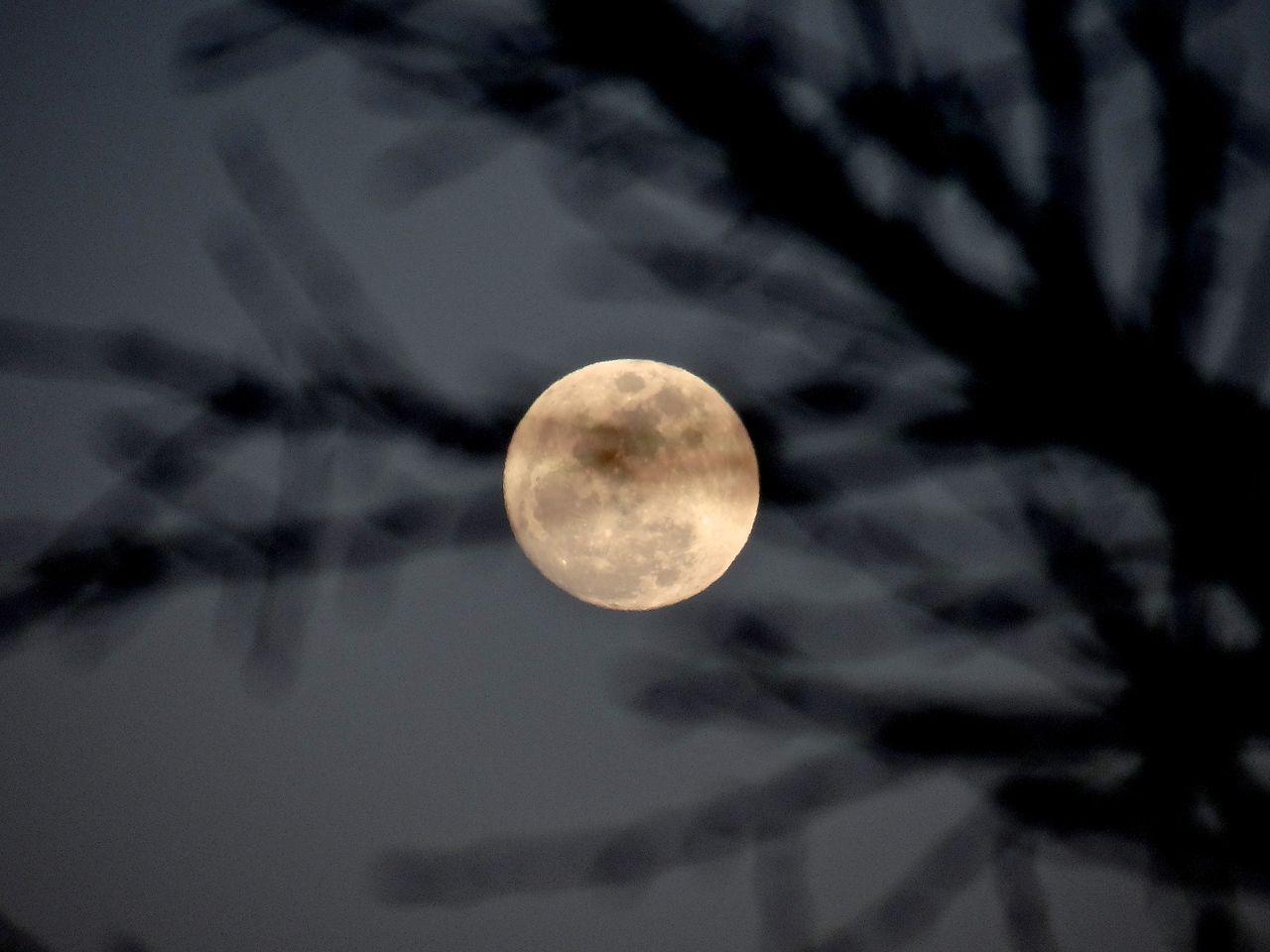 Focus on the moon, hold the shutter down half way, step behind a tree, snap