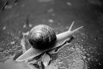 Snail after the Rain - 1
