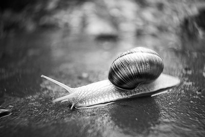 Snail after the Rain - 2