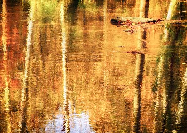 Autumn Reflections - SeriesI (6)