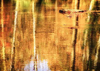 Autumn Reflections - SeriesI (6)