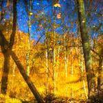 Autumn Reflections - SeriesI (2)