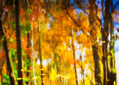 Autumn Reflections - Series I (1)