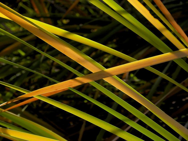 Cattail fall colors