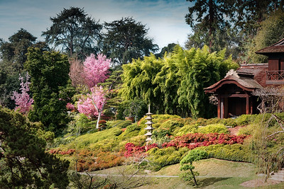 Japanese Garden at Huntington Library in the Spring