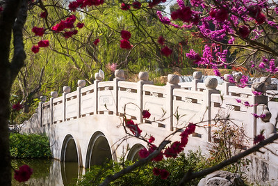 The Bridge at the Chinese Garden in Huntington Gardens