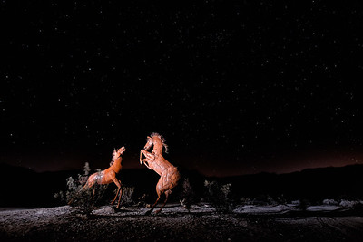 Light-painted Horses