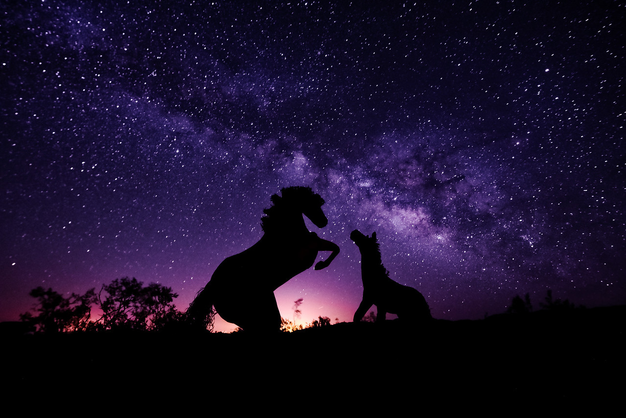 Horse Silhouettes under the Milky Way