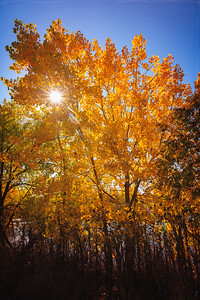 Fall Trees in Colorado