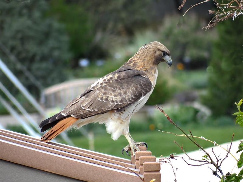 Ain't he purty?! Denver Botanic Gardens visitor