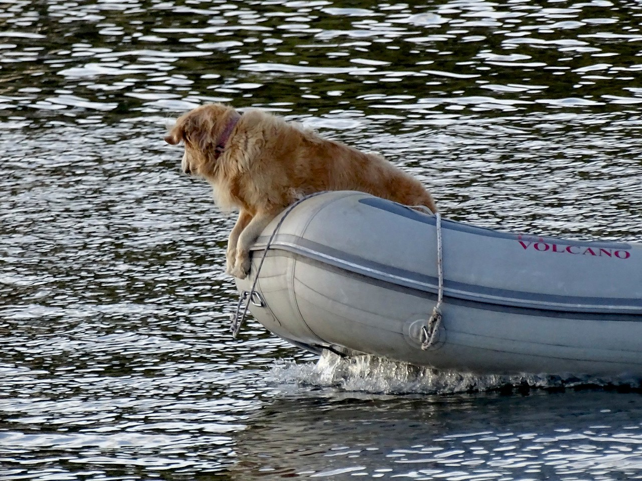 Watch dog- this was in the San Juan Islands last summer.