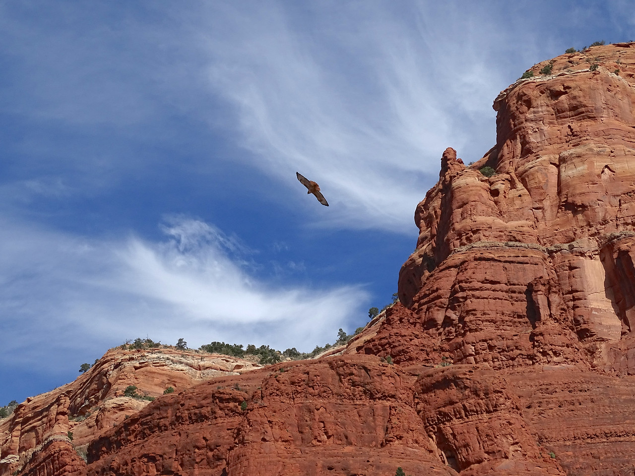 It was quite a moment when this hawk caught an updraft and rose up from nowhere