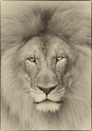 African Animals - Series l (4)
