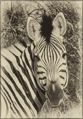 African Animals - Series l (5)