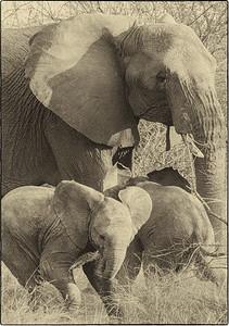 African Animals - Series l (1)