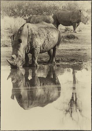African Animals - Series l (6)