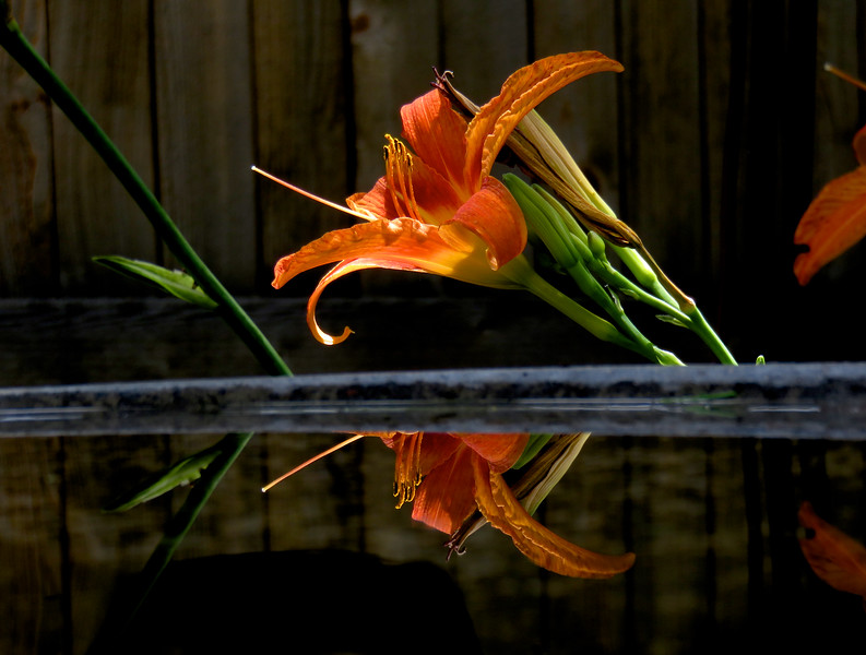 Day lily and bird bath