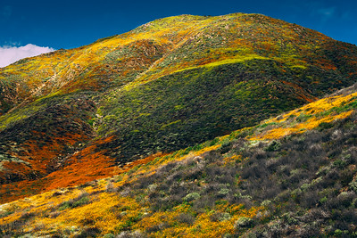 Walker Canyon during Wildflower Blooming