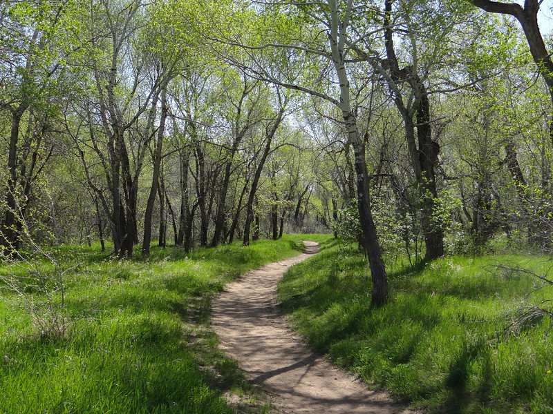 SPRING! arrives at a cottonwood-lined path