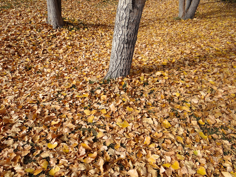 Cottonwood carpet