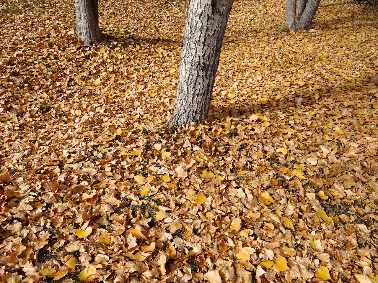 Cottonwood carpet