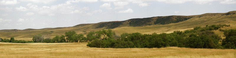 Typical prairie scene with cottonwoods hugging a creek