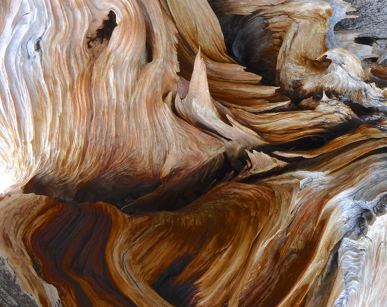 What looks like a scene from a lava-filled underground cavern is actually the amazing bottom of a bristlecone pine stump. The wood is so dense, instead of rotting, it erodes. Like a stone erodes. Look at those colors!