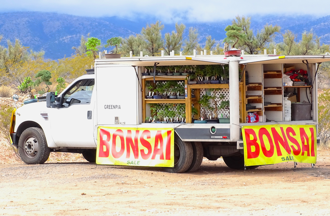 Whaaa?! A roadside Bonsai truck in Arizona- not something you see every day!