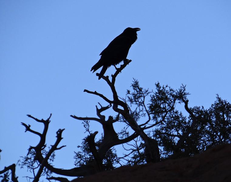 Raven talking to me
